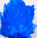 Hen Patches/Soft Hackle - Kingfi Blue