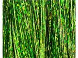 Flashabou - holografisk Chartreuse
