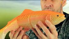 SG 3D Line Thru Trout 30cm 303g MS Golden Albino Rainbow